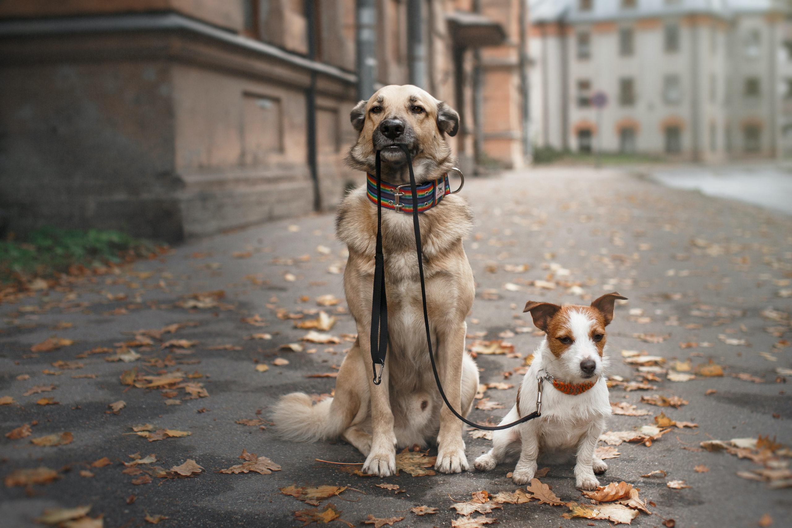balade-2-chiens-en-ville-scaled.jpg